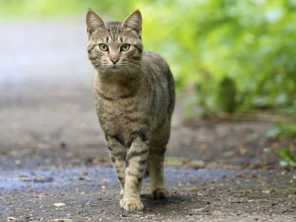 Готовы ли вы завести кошку