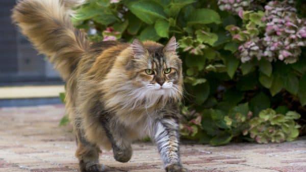Известные случаи возвращения кошек