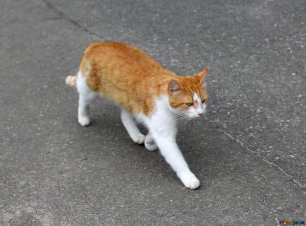 Как коты находят дорогу домой читайте статью