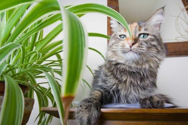 Как отучить кошку есть комнатные цветы
