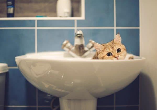 Как приучить кошку к воде читайте статью
