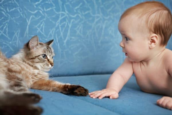 Какую кошку лучше завести для ребенка в квартире читайте статью