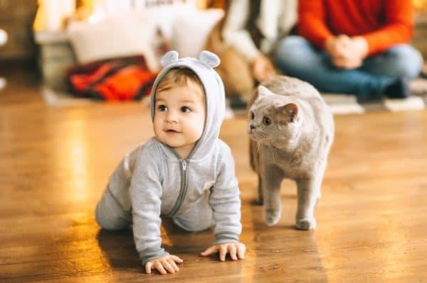 Какую кошку лучше завести для ребенка в квартире