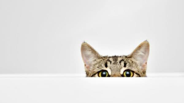 Кот боится чужих людей