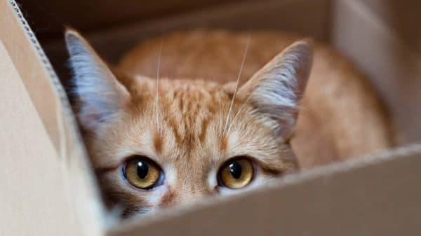Кот боится людей