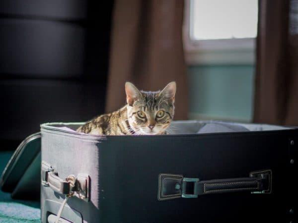 Переезд с кошкой в новую квартиру читайте статью