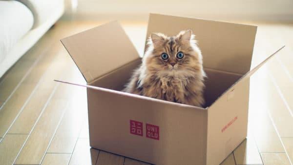 Переезд с кошкой в новую квартиру