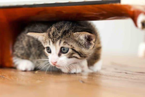 Почему кошка боится чужих людей