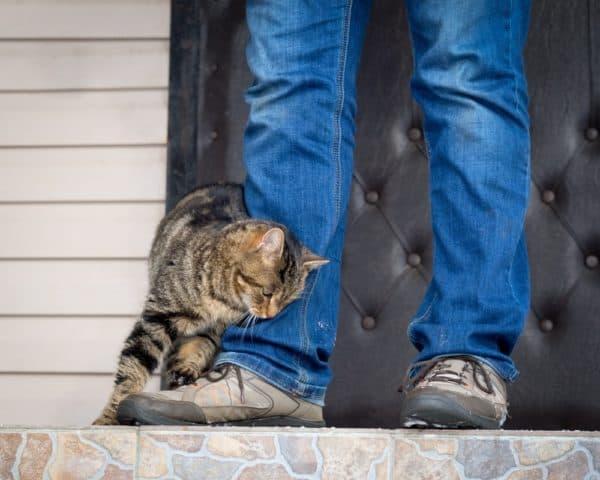 Почему кошка трется о ноги читайте статью