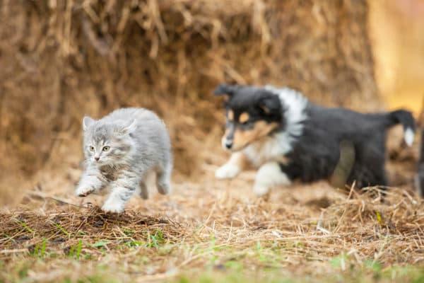 Почему кошки боятся собак читайте статью