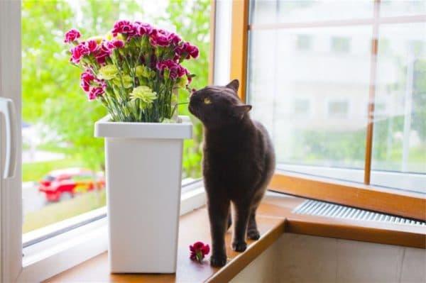 Почему кошки едят цветы