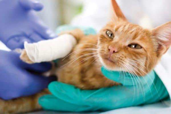 Можно ли кошке обработать рану зеленкой