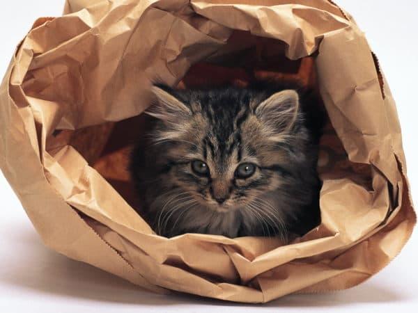 Что делать, если кот съел пакет читайте статью