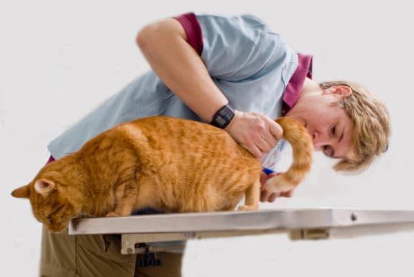 Цистит у кошек. Помогаем питомцу