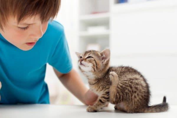 Демодекоз у кошек. Причины, симптомы, эффективные методы лечения
