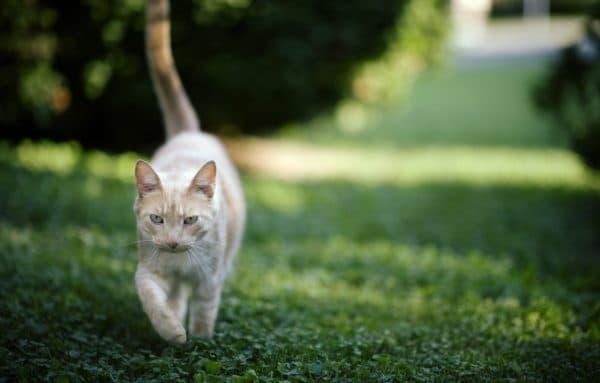 Имена народов мира для кошек на букву А