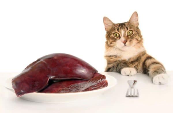 Как и в каких количествах можно давать сырую печень коту
