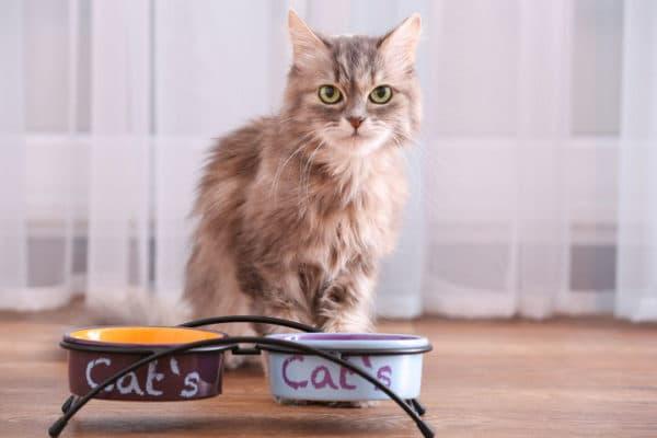 Как можно давать сырую печень коту