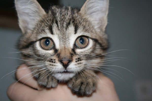 Как назвать полосатого котенка мальчика