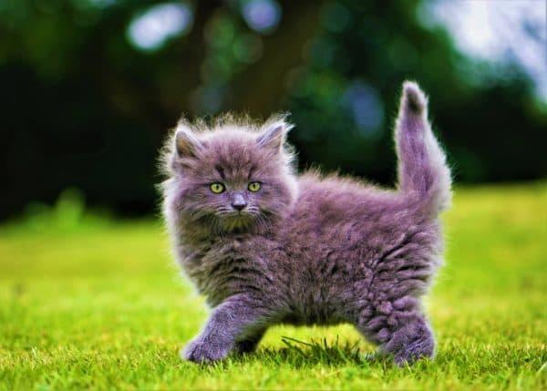 Как назвать пушистого котенка мальчика читайте статью