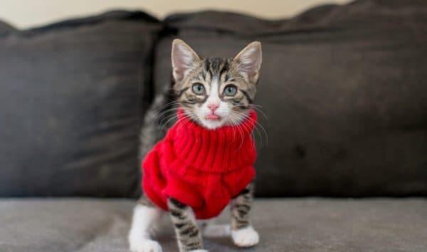 Как приучить котенка к кличке