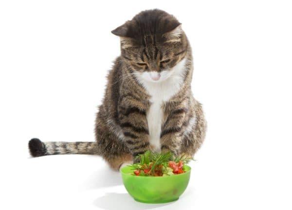 Каким овощам не место в кошачьем меню