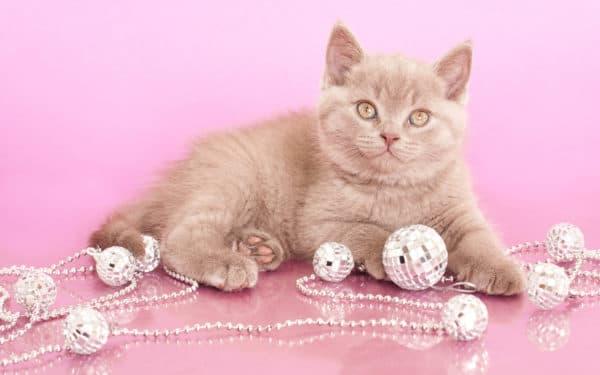 Клички для кошки девочки
