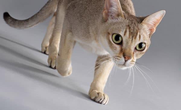 Клички для котов на букву А