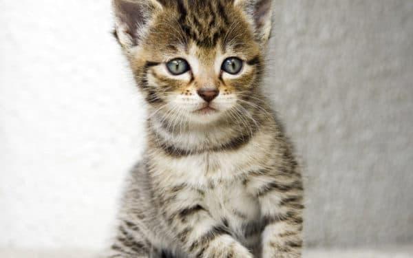 Клички для полосатого котенка мальчика