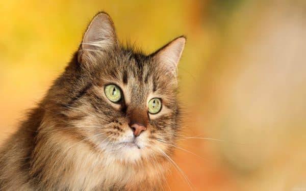 Клички кошек на букву А