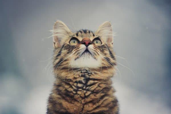 Клички кошек на букву А читайте статью