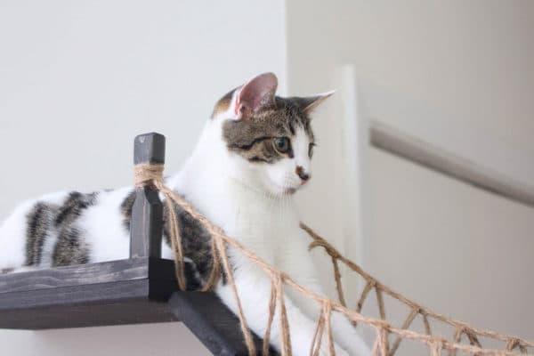 Клички кошек на букву Д для девочек читайте статью