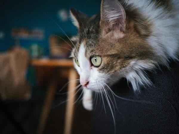 Клички кошек на букву Д для мальчиков читайте статью