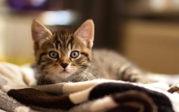 Клички кошек на букву Е для девочек читайте статью