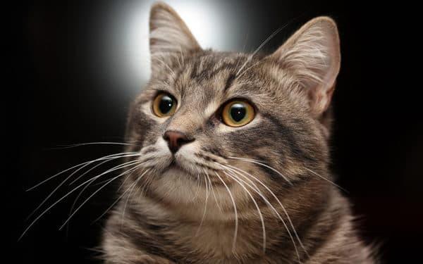 Клички кошек на букву Е для мальчиков читайте статью