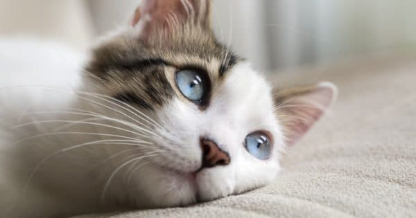 Клички кошек на букву Г для девочек читайте статью