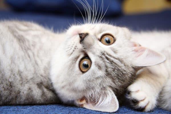 Клички кошек на букву Г