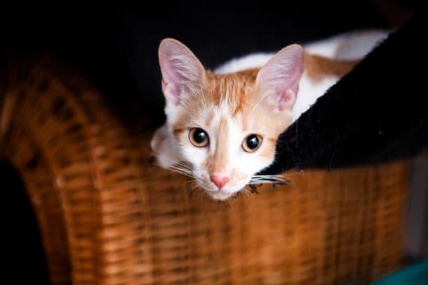 Клички кошек на букву В читайте статью