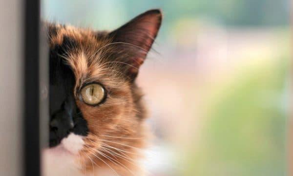 Клички кошек на букву В для девочек читайте статью