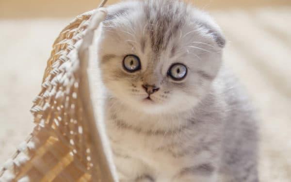 Клички кошек на букву В для мальчиков читайте статью