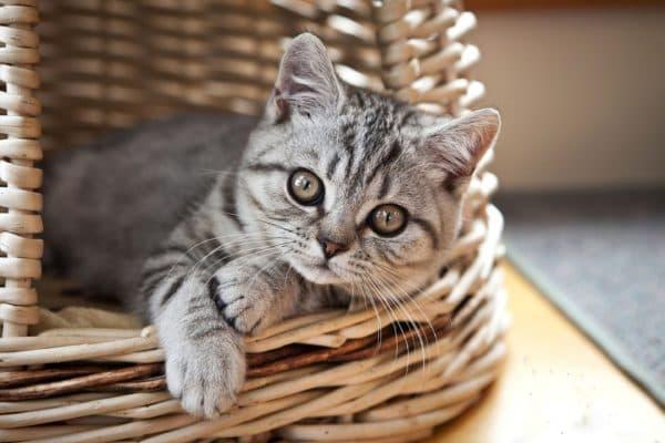 Клички кошек на букву В для мальчиков