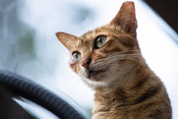 Клички кошек на букву В