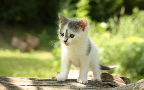 Клички котов на букву В для мальчиков читайте статью