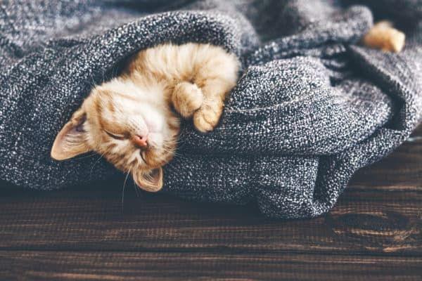 Котенок вялый