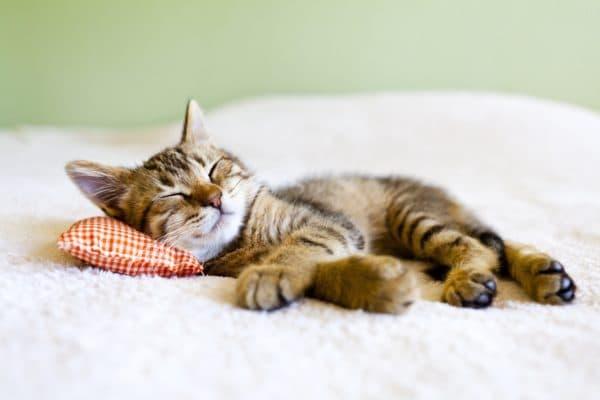Котенок вялый и постоянно спит, что делать