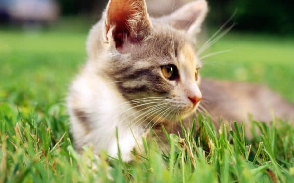Красивые клички для кошек-девочек и их значения на букву Е