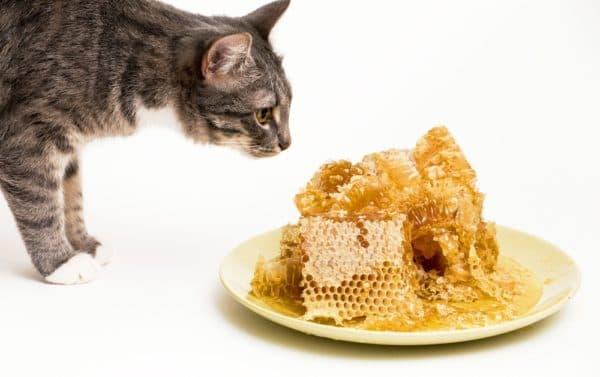 Можно ли кошкам давать мед