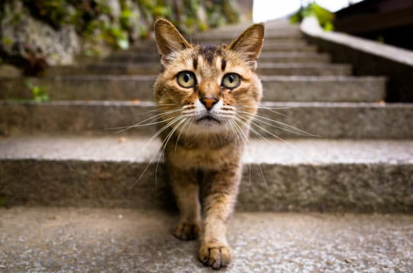 Научное объяснение «магического» взгляда кошки