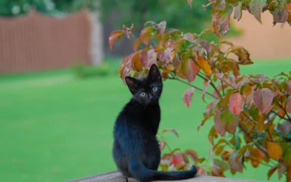 Называем котенка-девочку с черной шерсткой