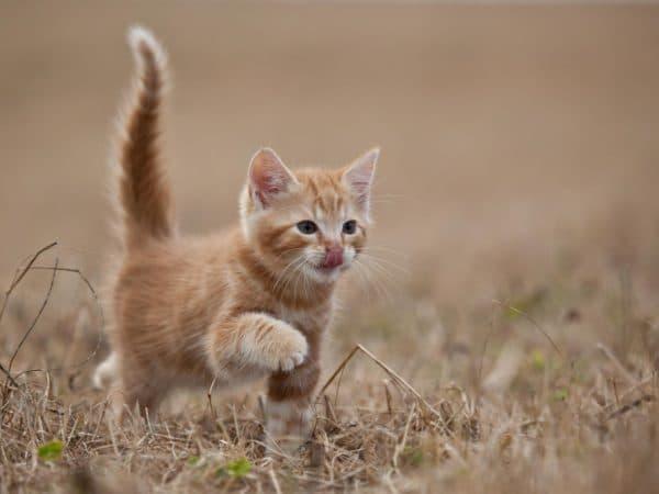 Называем котенка-девочку с рыжей шерсткой